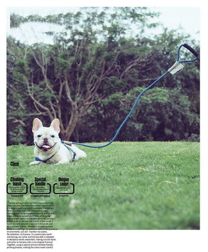 Frenchie World Shop Frenchie World™ Orthopedic Harness
