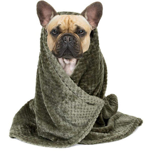 Frenchie World Shop Dog care Frenchie World® Super absorbent microfiber towel