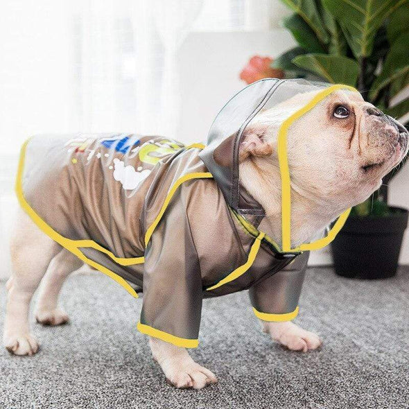 raincoat for a frenchie