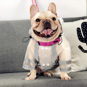 Frenchie World Shop Pets Products Dogs Supplies French Bulldogs Pugs Transparent Raincoats
