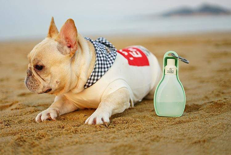 Frenchie World Shop Dog Bowls Portable travel water bottle