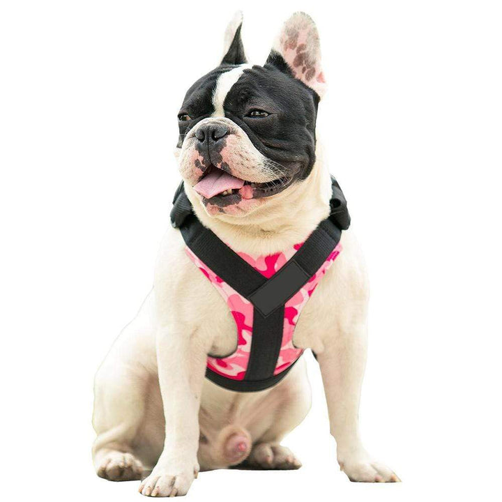 frenchie harnesses