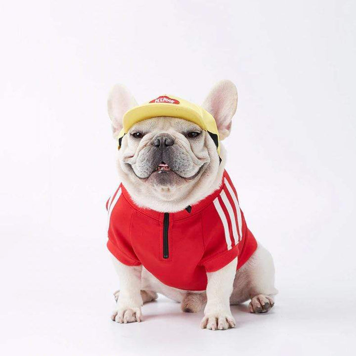 hoodies for frenchies