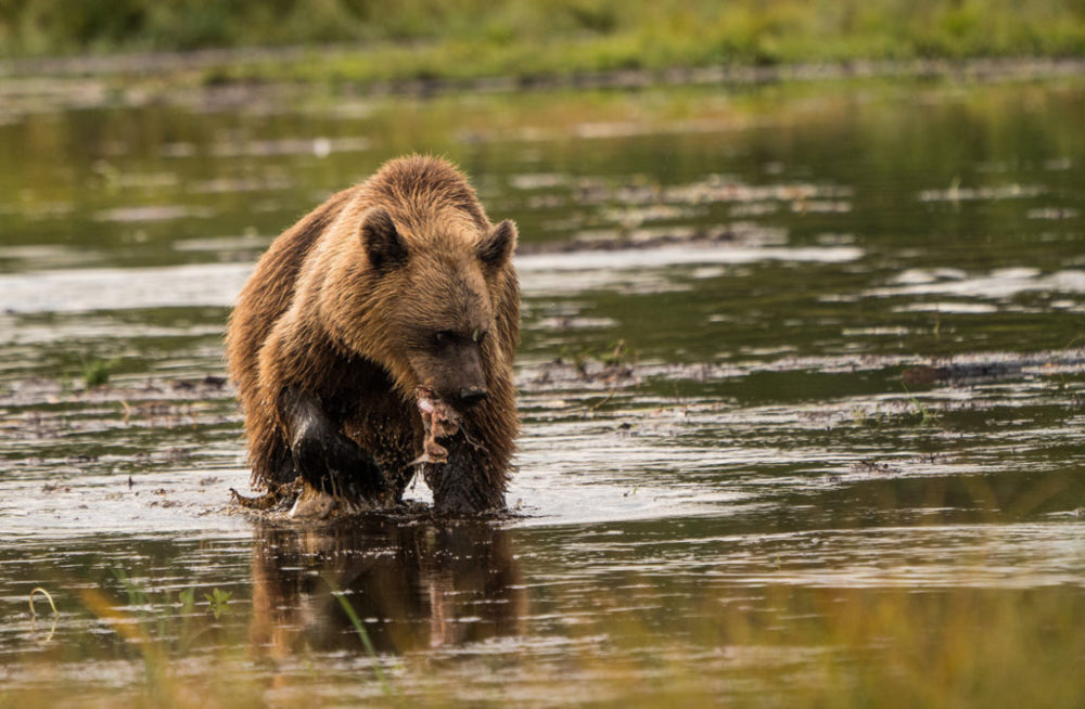 Jaw Dropping Detour - Finland's Brown Bears: Four Wheeled Nomad
