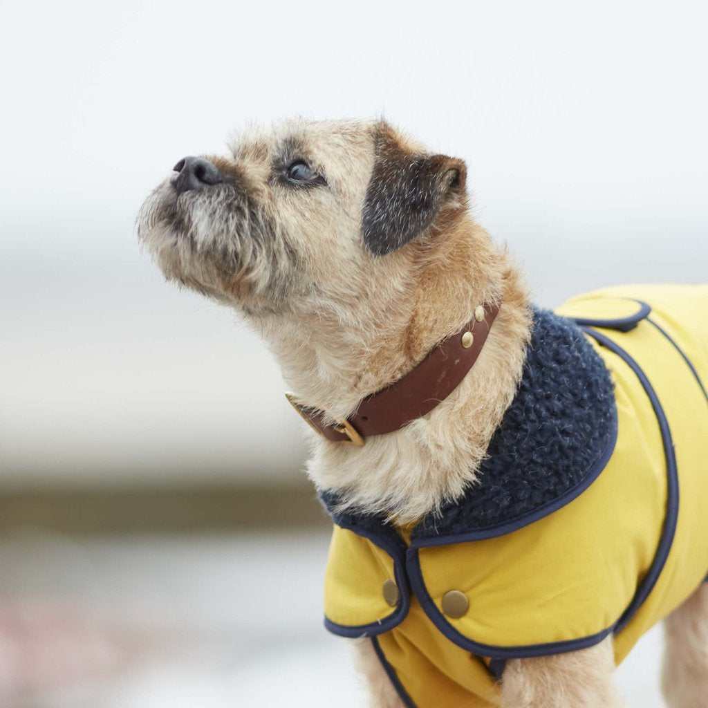 Fetch & Follow Winter Dog Coat