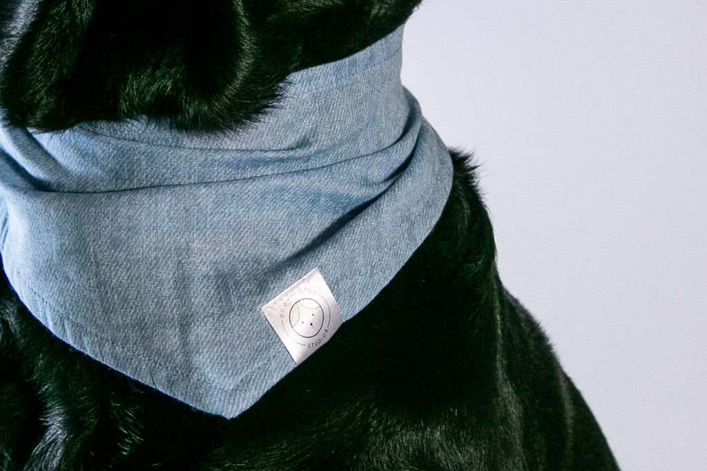 Dog Photog Bandanas