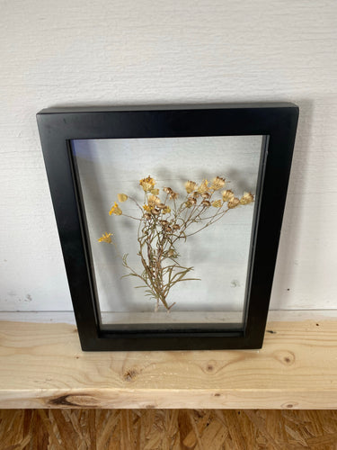 Dried yellow flowers from Cape Cod, MA