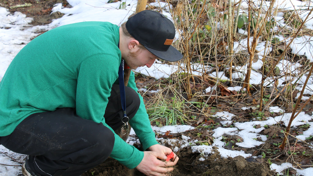 Snow Problem | 200 Native Plants in the Frozen Ground