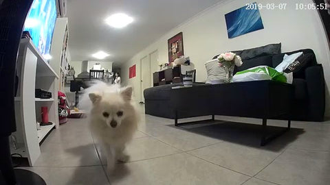 Logged in from Switzerland to see my fur baby in Australia! Love, love, love Pet Camera Feeder!