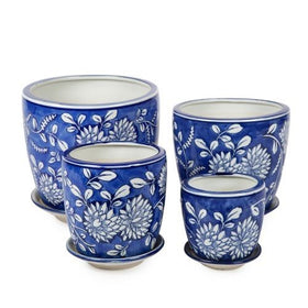 BLUE & WHITE ROUND POT CHRYSANTHEMUM MEDIUM
