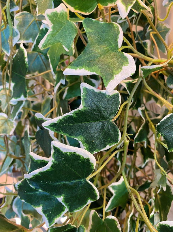 IVY LEAF VINE 1.2M - ARTIFICIAL