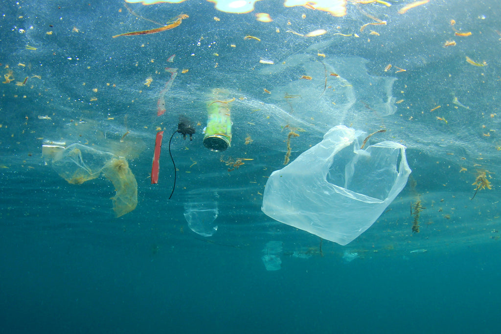 Bans, Taxes, and Fees: The Politics of Plastic Bags