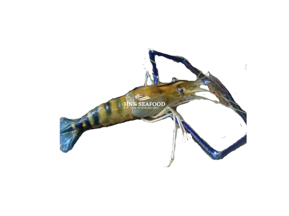 Fresh Water Prawn