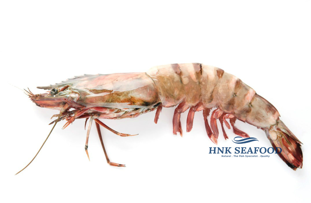Sea Tiger Prawn 海老虎虾