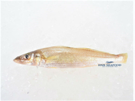 Whiting  沙尖