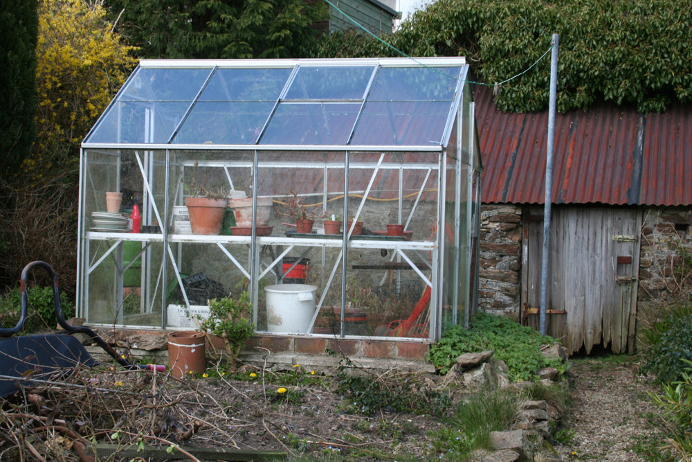 The pig shed behind the greenhouse before being demolished
