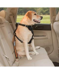Kurgo Direct to Seatbelt Tether Black Orange Dog