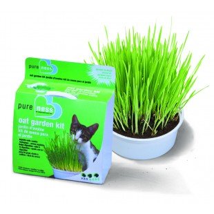 Cat Grass (Van Ness)