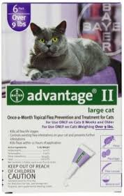 Advantage II Large Cat over 4KG