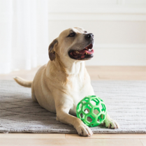 JW® HOL-EE ROLLER® LARGE DOG TOY