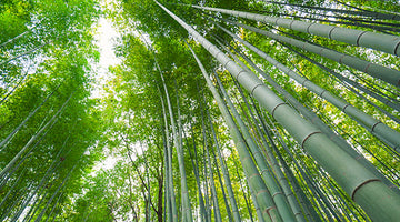Is bamboo clothing sustainable?