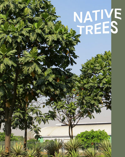 Native Trees Identification (Digital) - Where To Next
