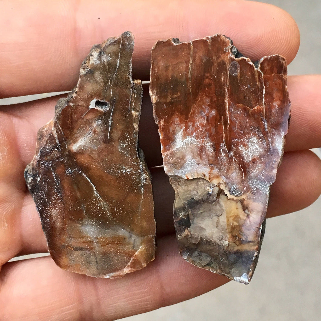 2pc Top Quality 55g Polished Petrified Wood Fossil Thick Decorator Slab Set - Madagascar - Item:PTW17039