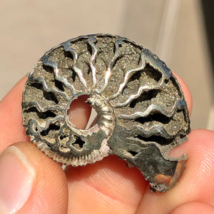 "Rare 6.5g 1.3"" Large Natural Pyritized Druzy Ammonite Fossil - Mikhailovsky Quarry, Ryazan, Russia - Item:PY19087"