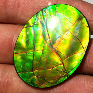 "Museum Grade 45.4cts Ammolite ""Oval"" for Jewelry. Alberta, Canada - Item: AMO16001"