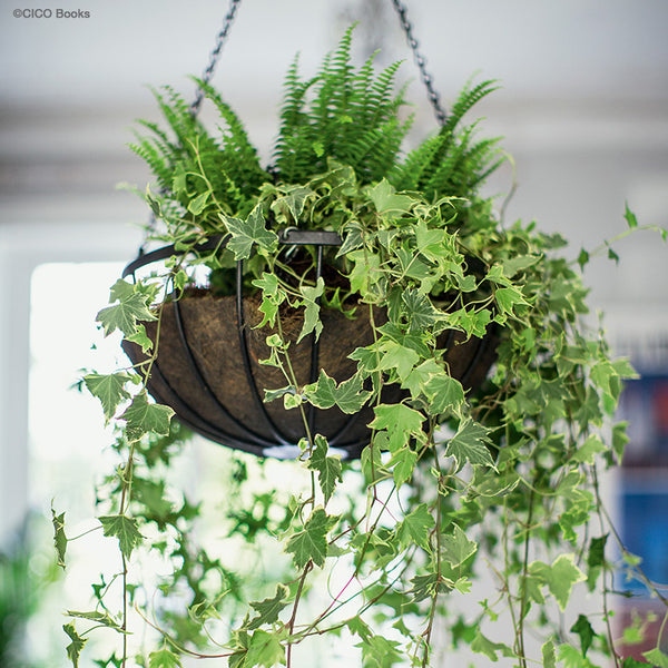 House Plants Hanging Basket