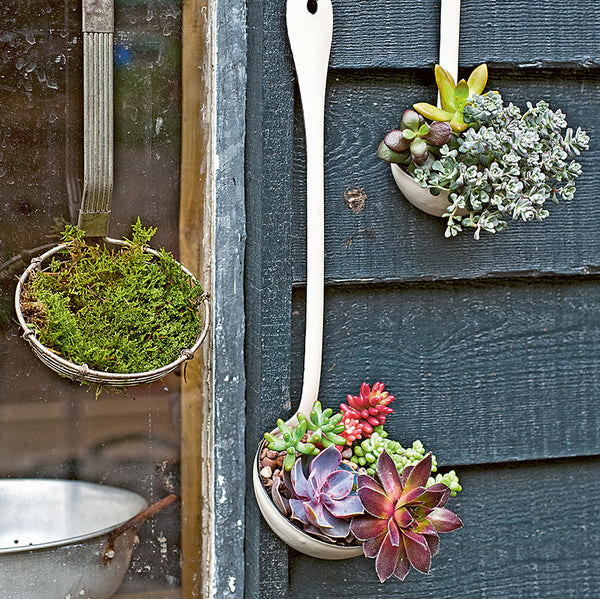 tiny tabletop gardens planted enamel ladles