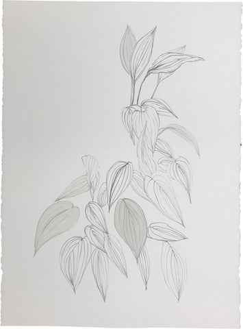 Botanical Portrait I