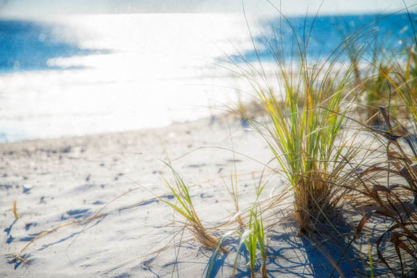 Beachgrass I