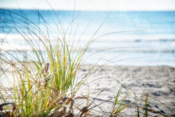 Beachgrass II