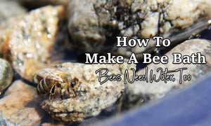How To Make A Bee Bath |  Bees Need Water