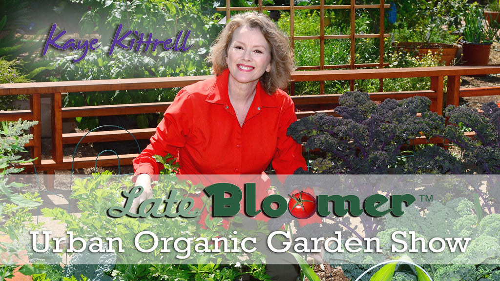 Late Bloomer Show | Interview with Kaye Kittrell