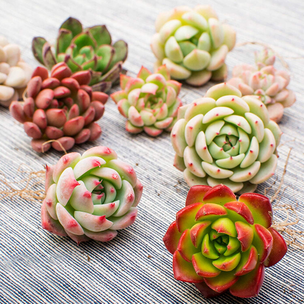 rosette succulents online the next generation gardner