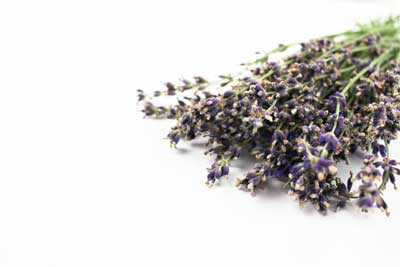 royalty free lavender stock photos