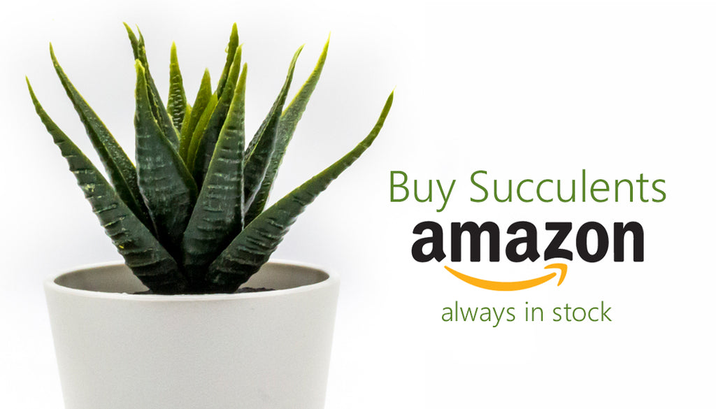 buy succulents online on amazon
