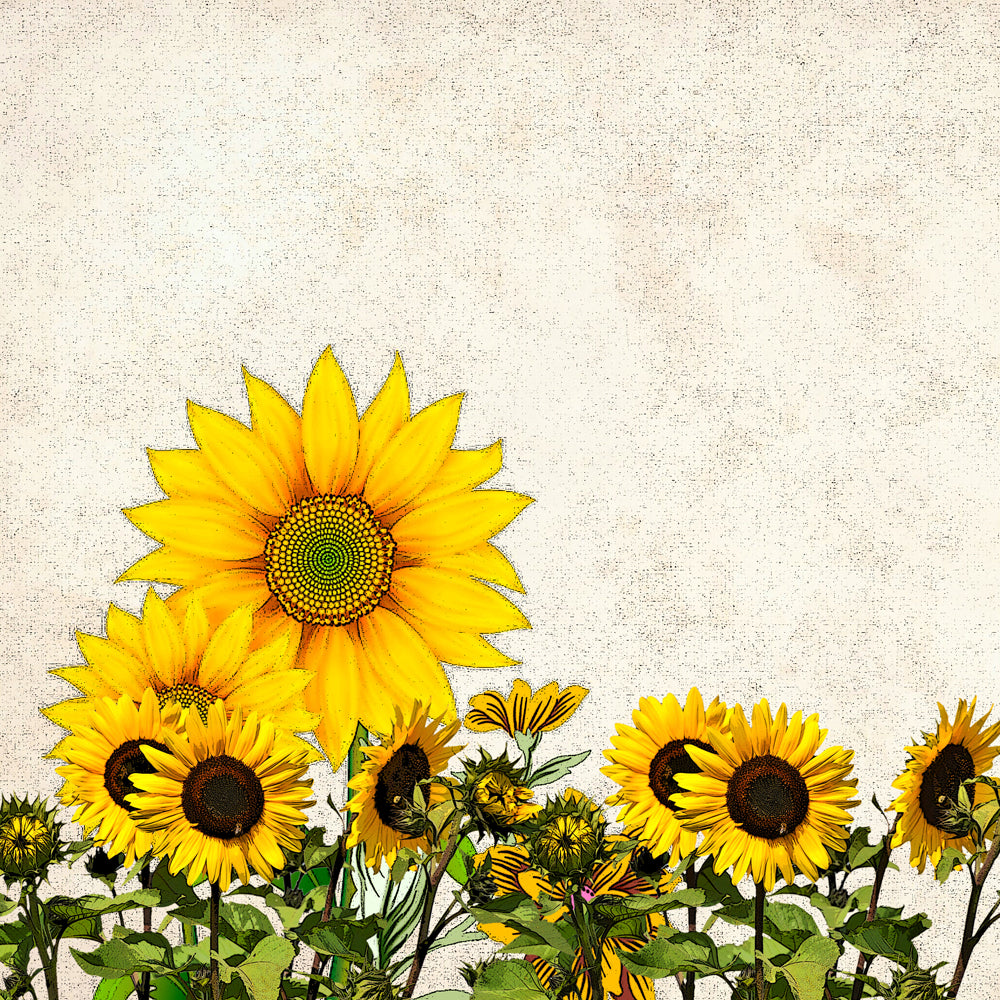image about Sunflower Printable identified as Sunflower Paper Printable Sbooking Paper - Do-it-yourself Craft Club
