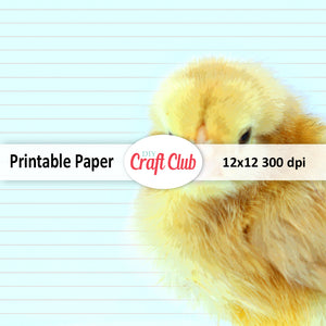 lined baby chick scrapbook paper to print