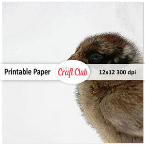 brown baby chick scrapbooking paper