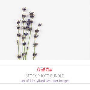 images of lavender flowers