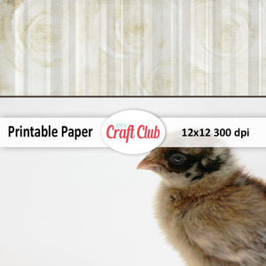 baby chick digital paper