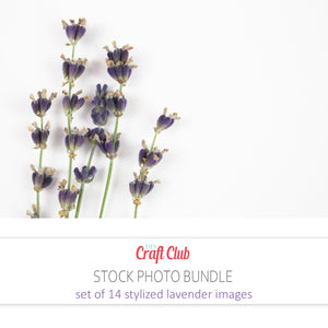 lavender flower pictures hd stock photos