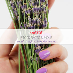 lavender stock photo bundle
