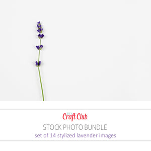 lavender stock photos for bloggers