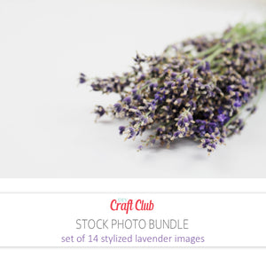 lavender stock photos royalty free