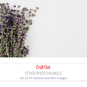 lavender stock photos set of 14