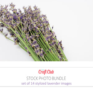 lavender stock pictures